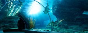 ausflugtipp-ozeanum-aquarium