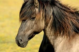 horse-337215_1280